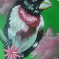 this painting consist of a bird that is known as the rose breasted grosbeak standing on a branch, and surrounding the bird, are cherry blossoms with a green background