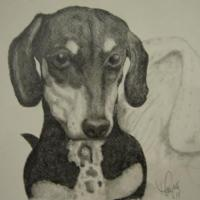 Pencil drawing of family dachshund given as gift this past Holiday