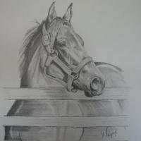Pencil drawing of local mare standing at fence