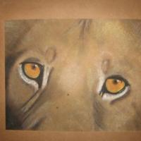 Pastel drawing of lions face and eyes