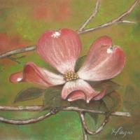 Pastel drawing of pink dogwood flower done on recycled kraft stock.