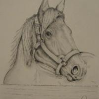 Pencil drawing of attentive mare waiting at fence.