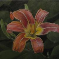 Oil painting of a Wild Daylily on canvas. This work is unframed and priced as such. Main colors are red and green. It would look nice in a dining area, family room, kitchen or bath. it is extremely detailed and will hold you eye for a long time.
