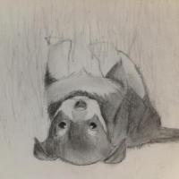 This is a drawing of my dog.
