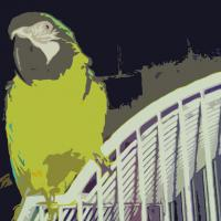 This is computer generated art. This is an altered photograph of an African parrot named Harley. It is not for sale yet, as I am not yet sure of the size.