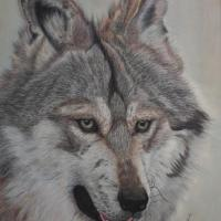 Wolf portrait  14 x 16  in colored pencil