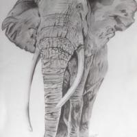 Pencil sketch