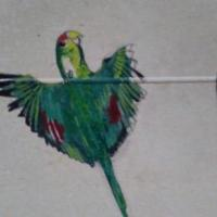 A flying parrot I done in acrylics on my bedroom wall as a part of a large wall mural still in progress at the time but parrot was completed in paint in 16 minutes. A 11x14 in diameter