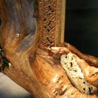 This frame is unique because its pieces appear to be forming from the roots of an oak tree that look like the heads and bodies of an eel's.Please inquire for a price.