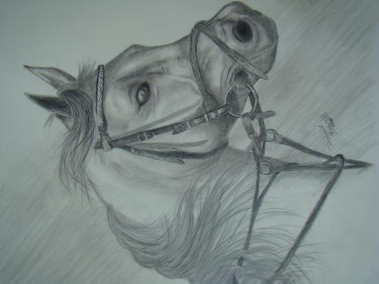 black and white  horse head