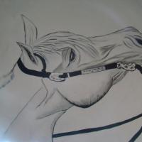 white horse with a bridle on him  , black and white