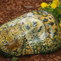These leopards are painted on a 100 pound rock. It is 18 inches in length and has a protective finish.