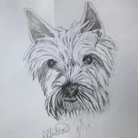 Our lovely Westie