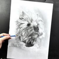 Another Commissioned portrait of the dog in graphite